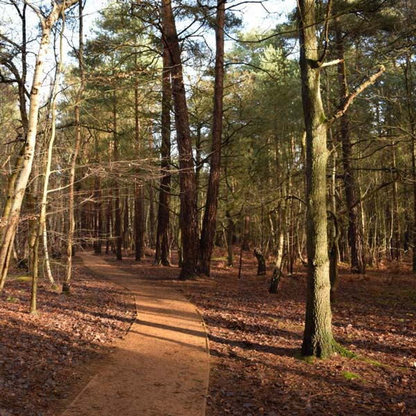 Forest Bathing at Horsell Common, Woking, Surrey